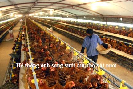 hệ thống sưởi ẩm cho vật nuôi